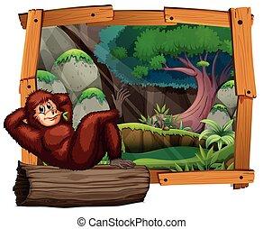 Urangutan on the log in the jungle