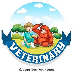 urangutan, veterinario, parque, examinar