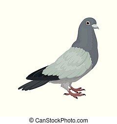 urbain, gris, vecteur, pigeon, fond, illustrations, blanc, vue côté