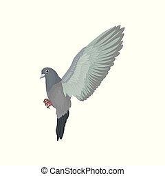 urbain, voler, pigeon, gris, vecteur, fond, illustrations, blanc