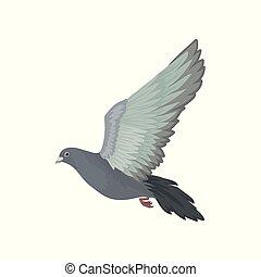 urbain, voler, pigeon, gris, vecteur, fond, illustrations, blanc, vue côté