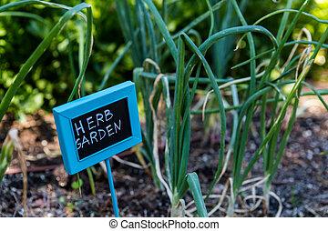 Urban garden - Organic urban garden in full growth at the ...