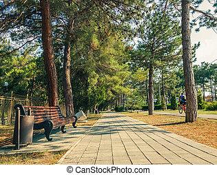 urban pedestrian path among pines