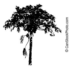 Urban Tree Vector