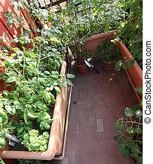 urban vegetable garden in a terrace of a house