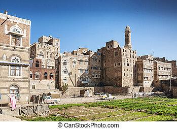 urban vegetable garden in sanaa city yemen