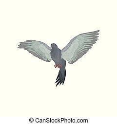 urbano, disteso, piccione, grigio, vettore, fondo, illustrazioni, bianco, ali