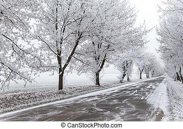 urbano, inverno, cinzento, congelado, árvores, estrada
