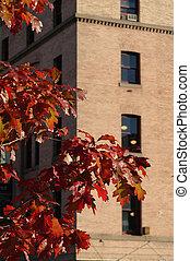 urbano, otoño