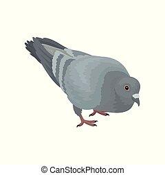 urbano, piccione, grigio, vettore, fondo, illustrazioni, uccello bianco