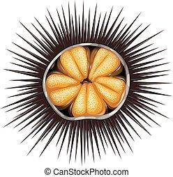 Inside of urchin in shell full of spikes