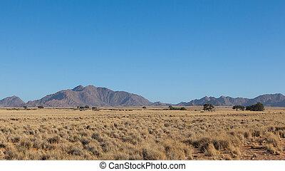 urgensy, afryka, południowy, obsiewa trawą, pustynia, drzewo, piasek, krajobraz, afrykanin, akacja, namibia, czerwony, sossusvlei