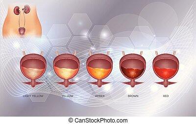 urinario, colores, vario, orina, vejiga