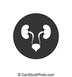 Urinary system vector white icon isolated on gray