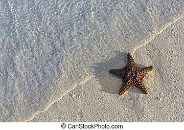 urlaub, meeresmuscheln, reise, ikone, seestern, sand, sommer, tropische , türkis