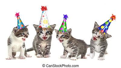 urodziny, śpiew, śpiew, kociątka, na białym, tło