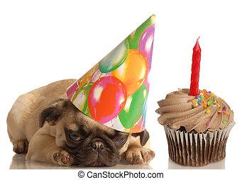 urodziny, pies