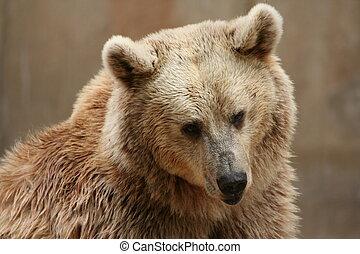urso, 1