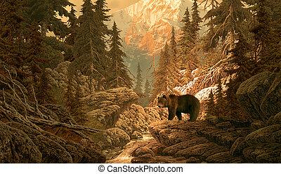 urso, em, a, rochoso