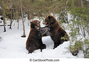 urso, em, inverno