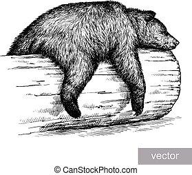 urso, ilustração, gravar