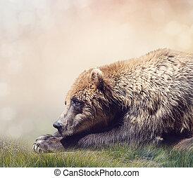 urso marrom, descansar