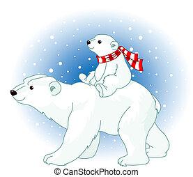 urso, polar, bebê, mãe
