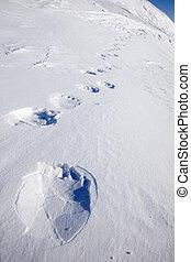urso polar, rastro