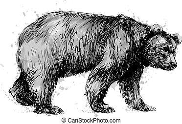 urso, retrato, experiência marrom, branca