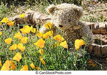 urso teddy, cheirando, flores selvagens