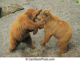 ursos, dois, outro, cada, morder, tocando