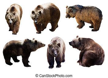 ursos, marrom, sobre, jogo, branca