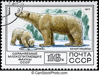 u.r.s.s., -, hacia, 1977, oso polar