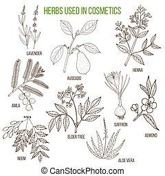 urter, bruge, cosmetology