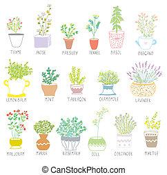 urter krydderier, sæt, ind, pots, hos, blomster, illustration