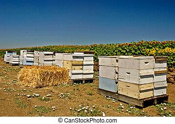urticaire, abeille