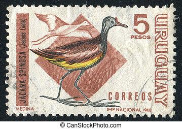 URUGUAY - CIRCA 1968: stamp printed by Uruguay, shows Wattled Jacana, circa 1968