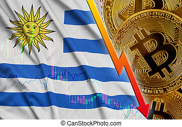 Uruguay flag and cryptocurrency falling trend with many golden bitcoins