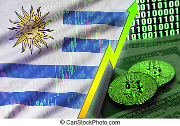 Uruguay flag and cryptocurrency growing trend with two bitcoins on dollar bills and binary code display
