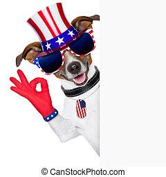 usa, américain, chien