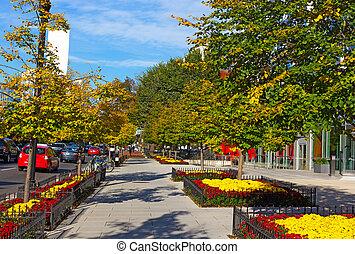 usa., automne, washington dc, tôt, rue