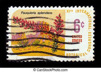 desert plant Ocotillo - Fouquieria splendens