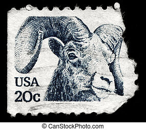 USA - CIRCA 1982 Bighorn - USA - CIRCA 1982: A Stamp printed...