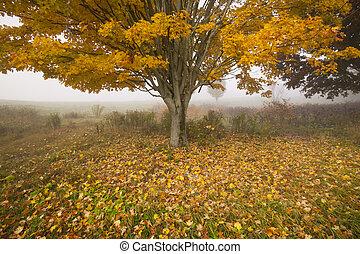 usa, eenzaam, vermont, boompje, morgen, herfst, nevelig, esdoorn