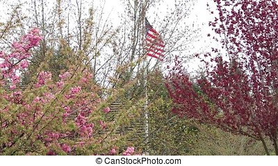 usa flag and cherry blossoms - United States of America flag...