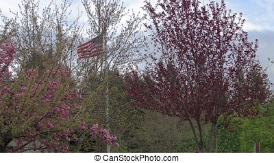 usa flag and flowering trees - United States of America flag...