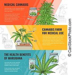 usage, ensemble, legalization, monde médical, marijuana, illustration, banners., vecteur, horizontal