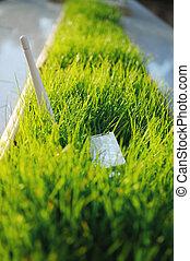 USB Wi Fi Adapter in green grass