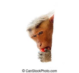 Use vegetables. Monkey with ripe tomato 1