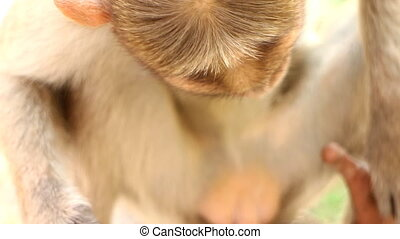 Use vegetables. Monkey with ripe tomato - Even monkey...